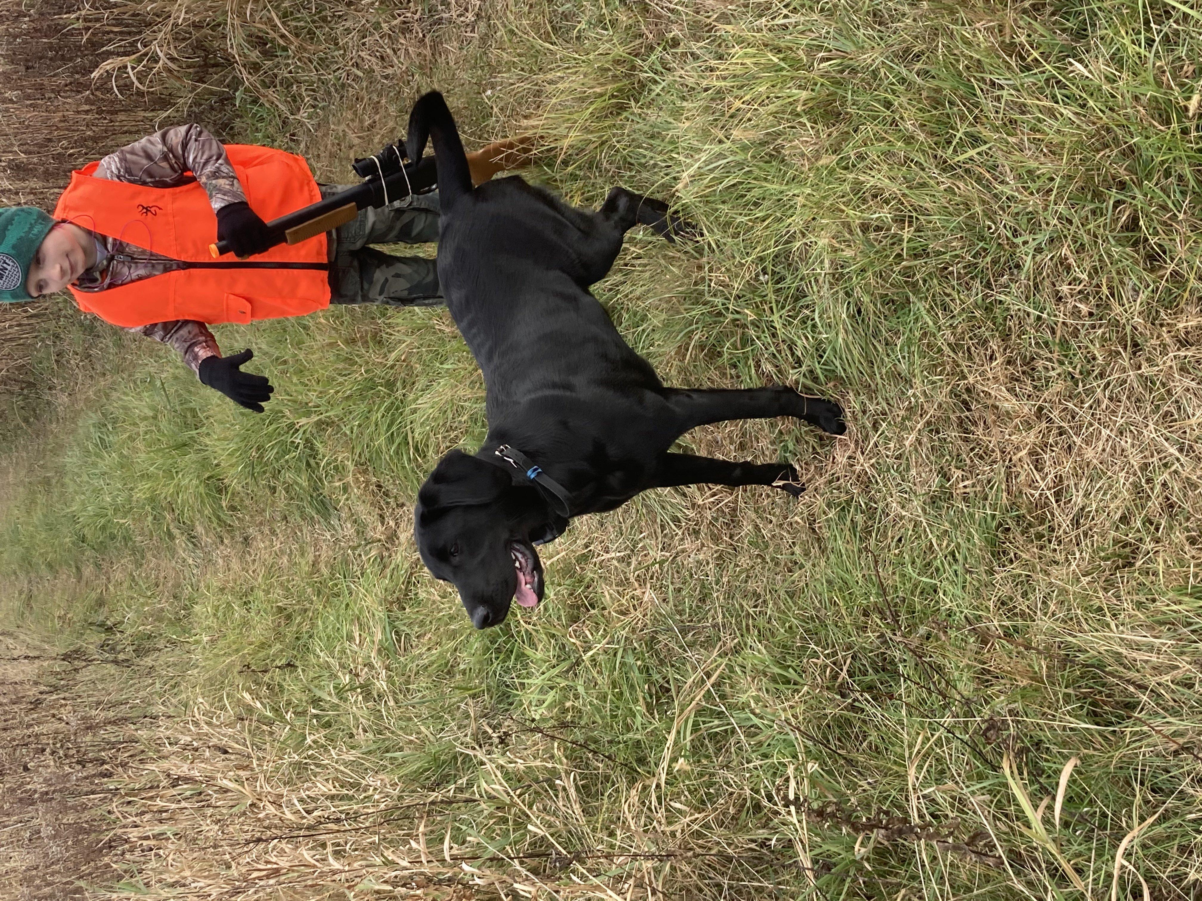 Eight month old Labrador Hunting-img_0236.jpg