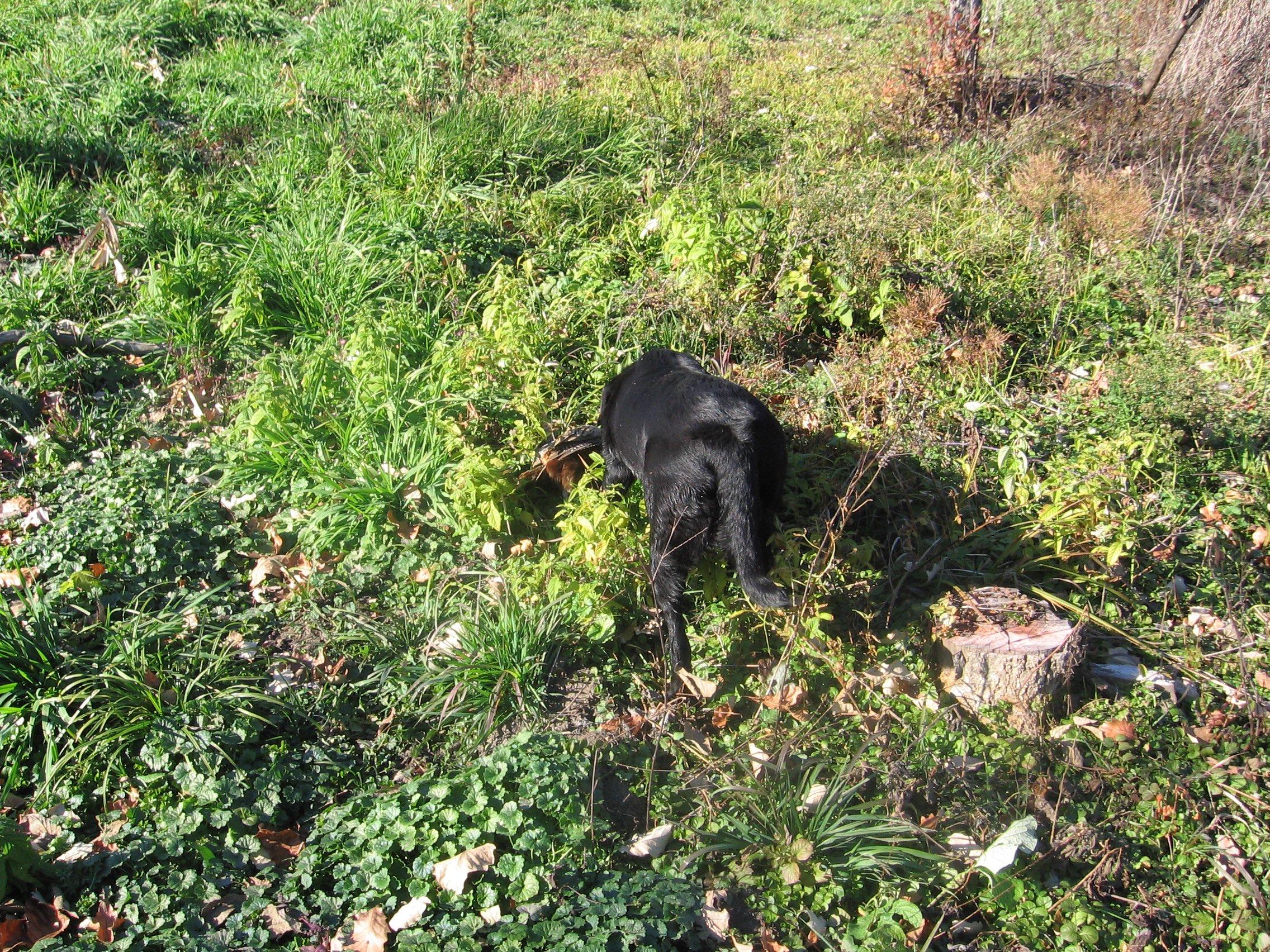 Upland Hunting-img_2401.jpg