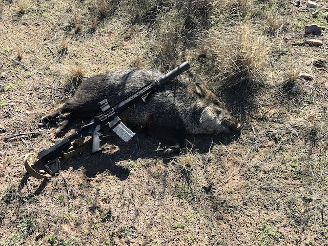You have to have a Dog-javelina-2020-1.jpeg