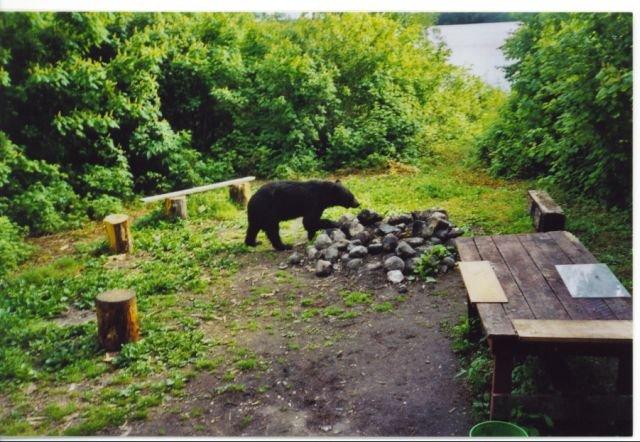 Bear Defence with a Handgun-smokey-4.jpg